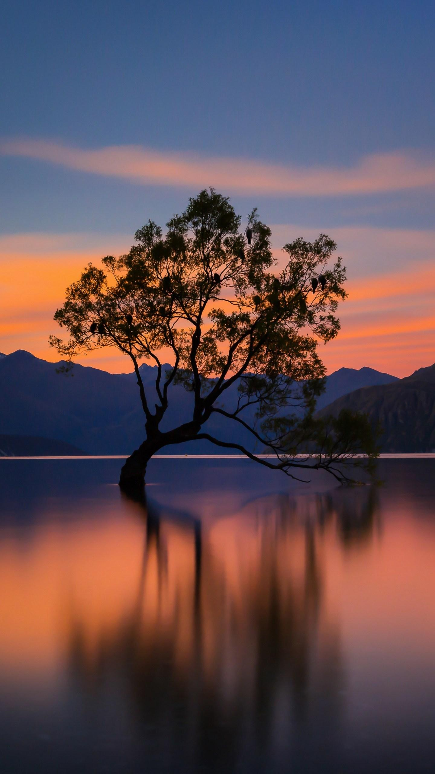 Lonely tree in Lake Wanaka. The most famous of Wanaka is the tree in Lake Wanaka, which grows alone in the center of the lake, swaying the tranquility of the lake. ©图虫创意