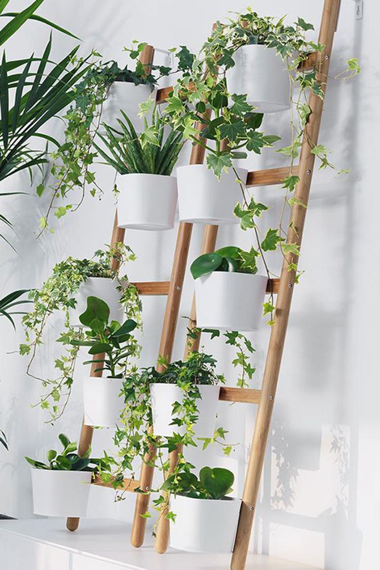 indoor jungle; Small Spaces Gardening; idées pour aménager son balcon; Bancos; Plant shelf; Green home; plant decor; indoor garden herb; plant wall; home garden; home design ideas; vertical garden.