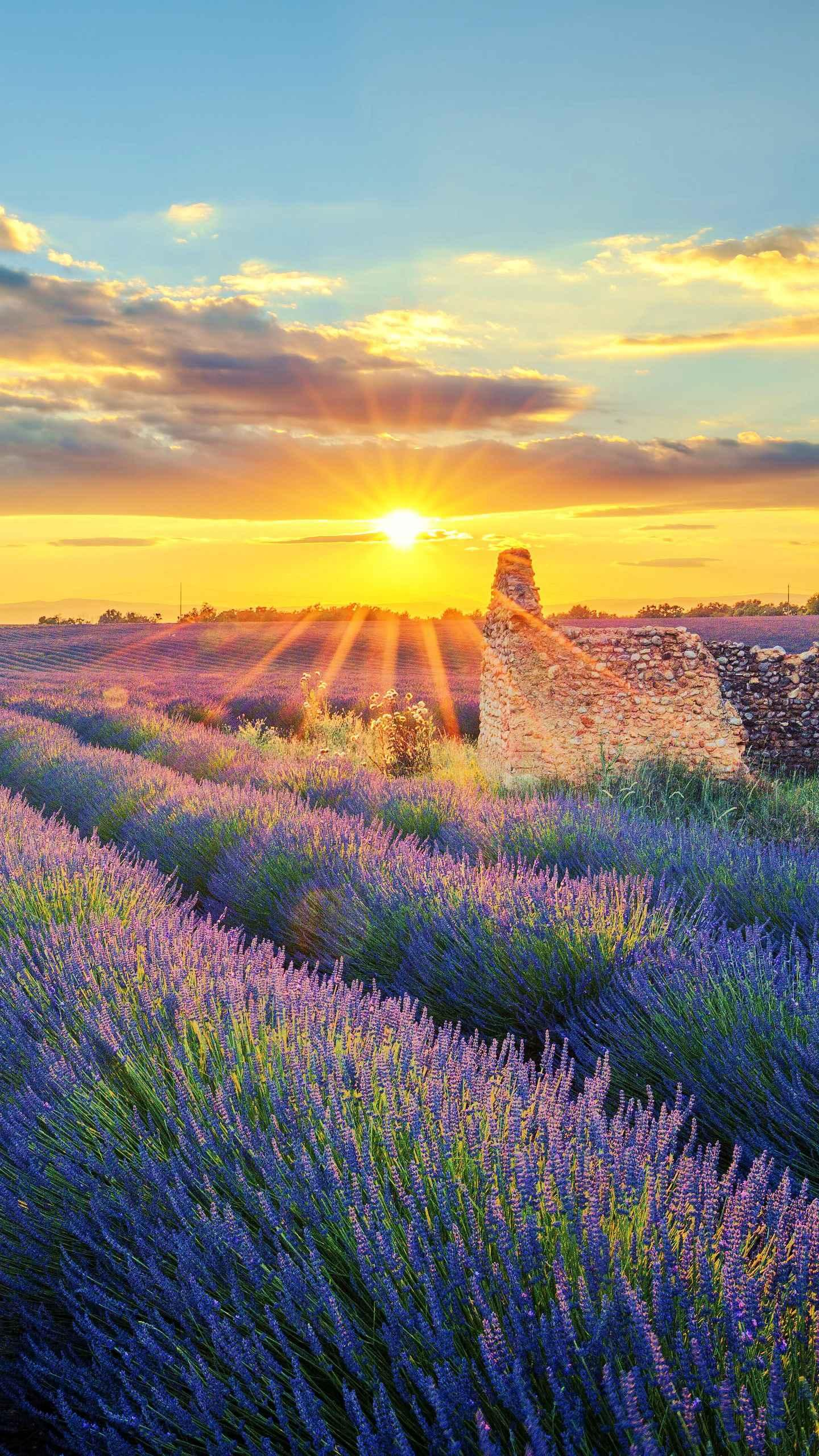 The land of lavender. Provence is the birthplace of medieval knights, and the famous towns are Marseille and Aix.