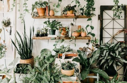 indoor jungle; Small Spaces Gardening; idées pour aménager son balcon; Bancos; Plant shelf; Green home; plant decor; indoor garden herb; plant wall; home garden; home design ideas; vertical garden.