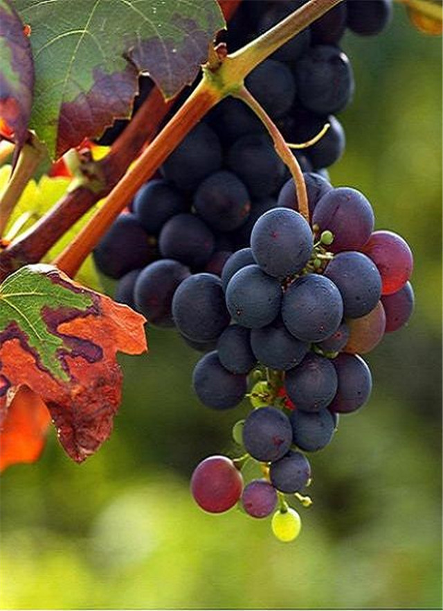 bumper harvest of the fruits, Thanksgiving Day, Thanks to nature, harvest festival ideas, fruits photography