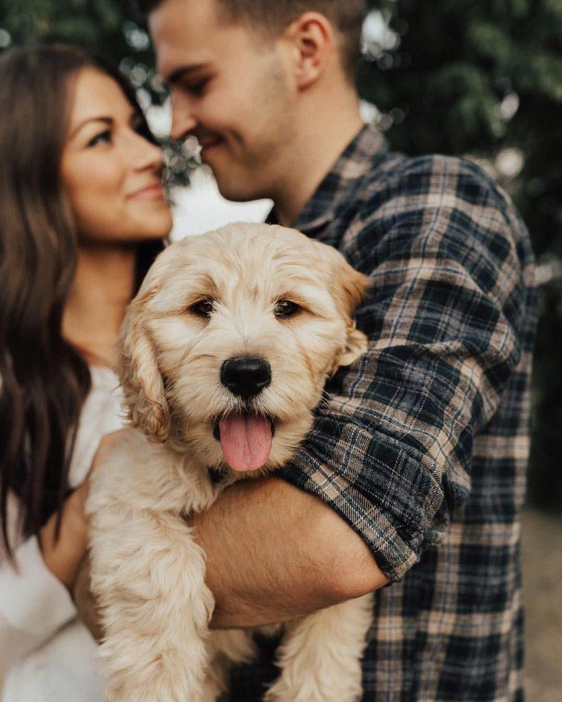 собаки пара фото появились изделия