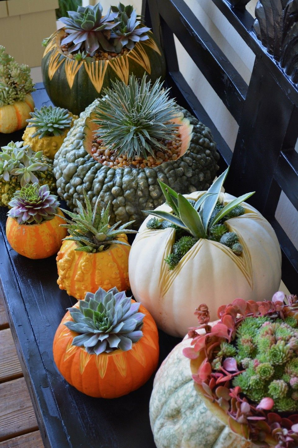 Best Pumpkin Decorating With Succulent, pumpkins vase, orange place mats, natural table decor, flower arrangements, Thanksgiving Decor Ideas